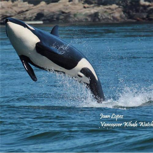 Breakaway Experiences Vancouver Whale Watching Tour