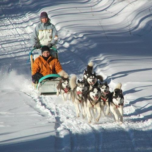 Breakaway Experiences Dog Sledding and Snow Shoeing Experience for 2 - Otter Lake, Quebec